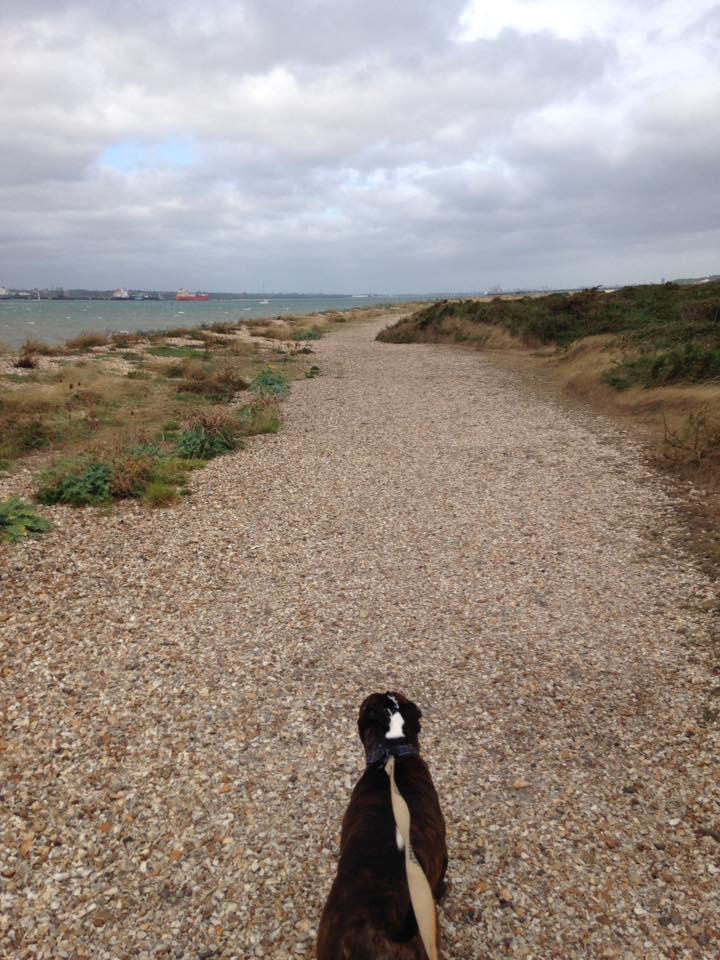 on lead walker