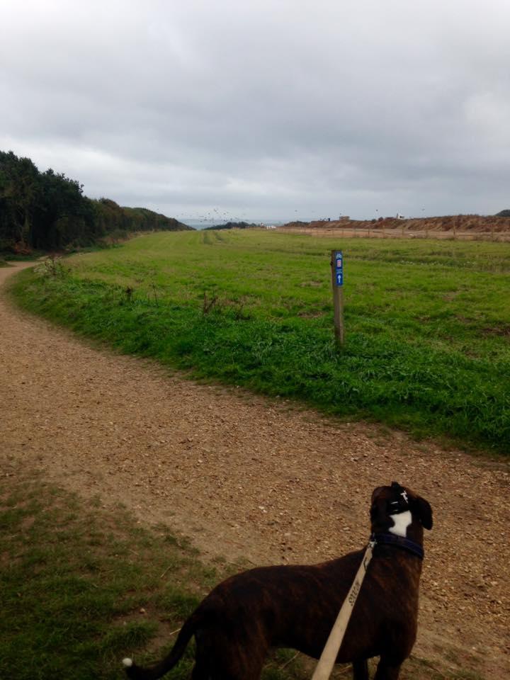 on lead dog walker locks heath