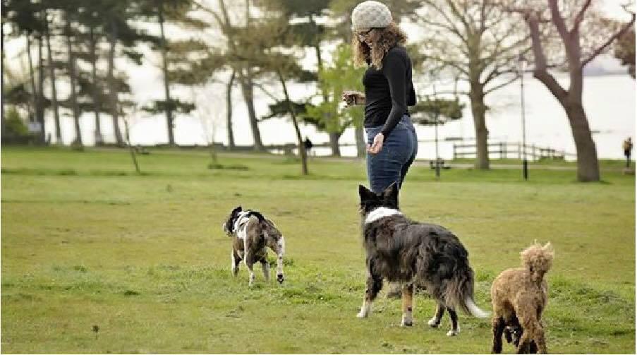 Dog Walker Locks Heath