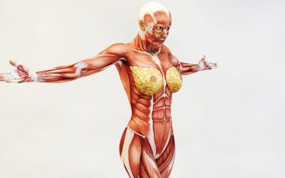 El secreto para evitar lesiones son los músculos estabilizadores