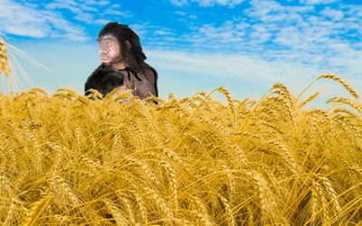 El neanderthal que desayunaba cereales