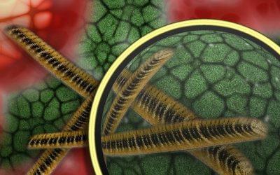 Prebióticos, probióticos y trasplantes de caca: así te defiendes de los antibióticos