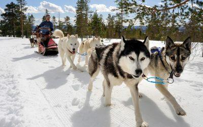 Vinter i Sverige: 10 morsomme vinteraktivteter