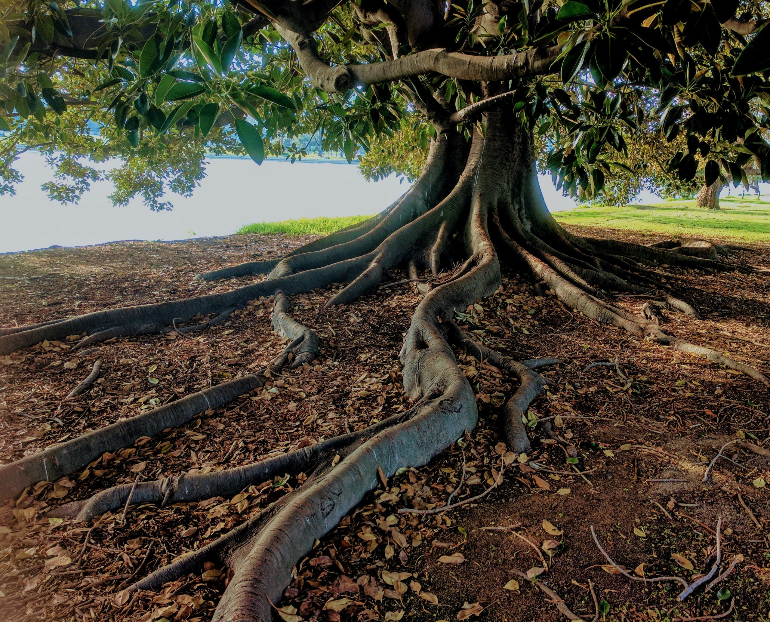 Trust is like a tree – 8 ways to build Trust.