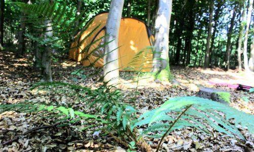 billig camping i Sønderjylland