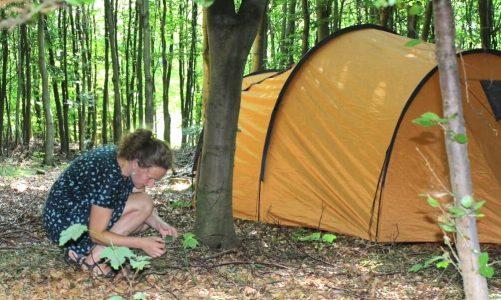 Billig camping-alternativ på Lolland-Falster og Møn – her må du telte frit