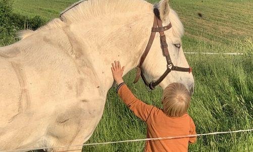 PODCAST: Børn i naturen – på mikroeventyr med hestevogn