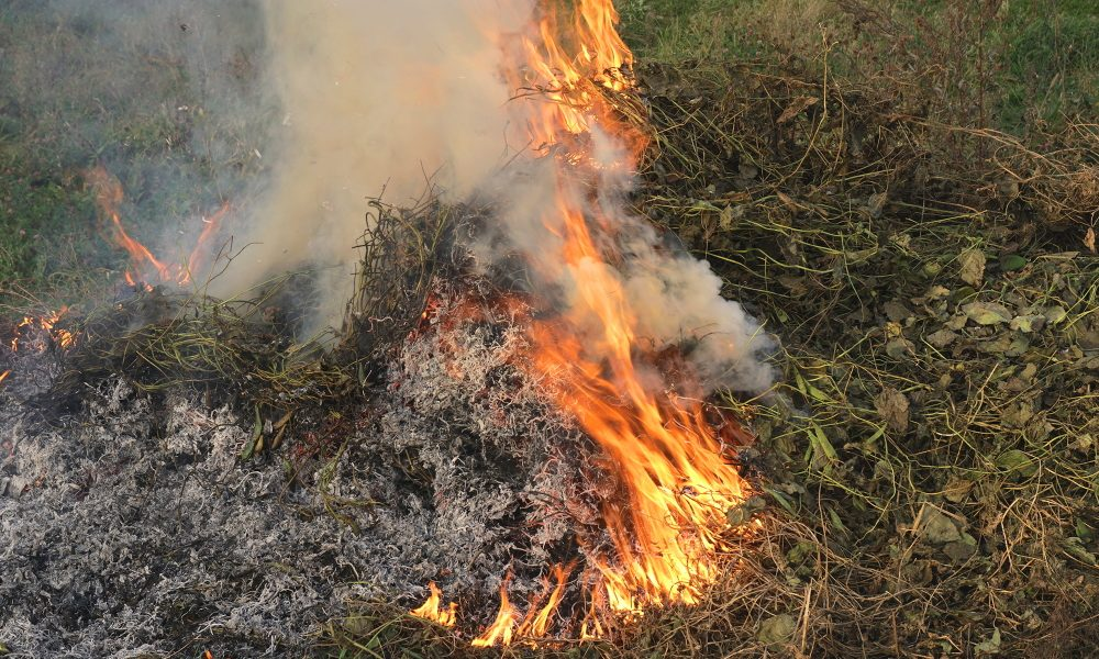 Burning dry grass and leaves