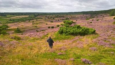 vandre vandreruter hiking i Danmark Kyst til Kyst Stien