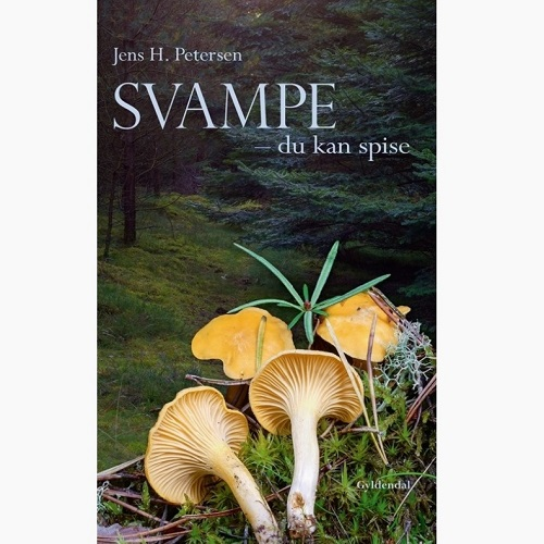 Spisesvampe i Danmark spiselige svampe i danske skove Svampe - du kan spise
