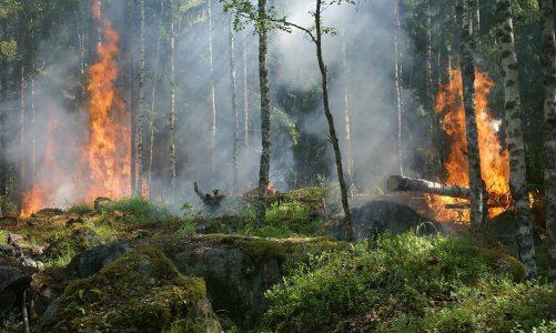 Tæt på: Skovbrand afværget i sidste øjeblik