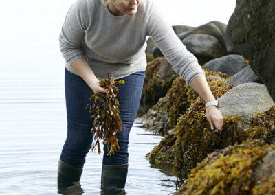 02-tang-tangplukker-havet-natur-portraet-portraetfoto-annaoverholdt