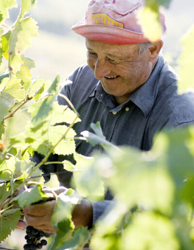 42-vinplukker-vinhoest-italien-reportagebilleder-annaoverholdt