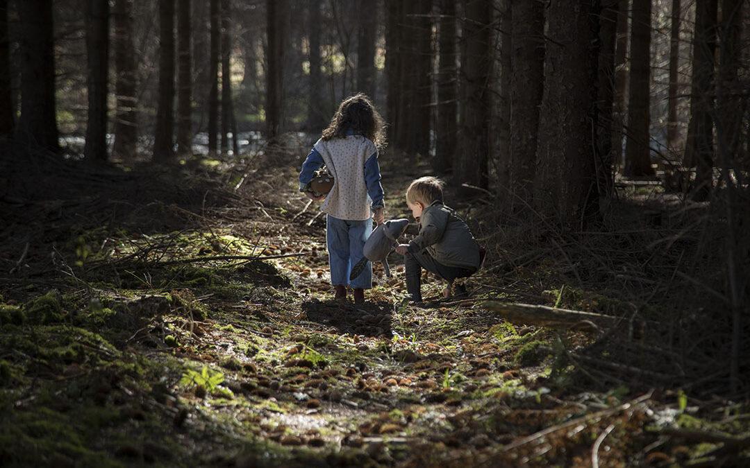 I skoven på fotoopgave