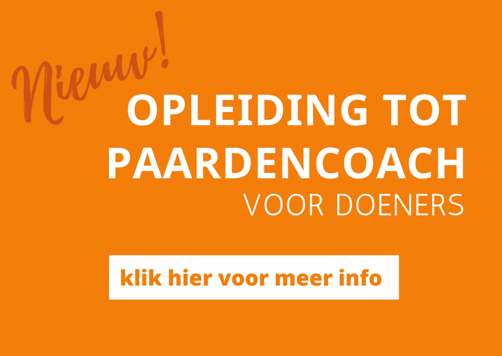 Opleiding tot paardencoach
