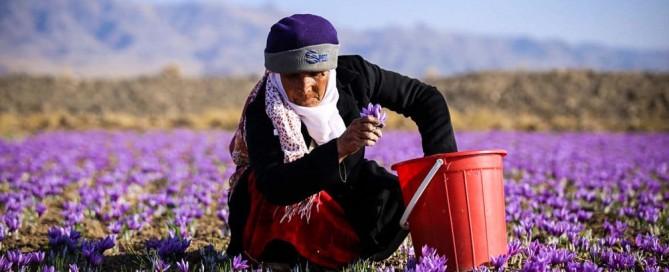 Iran-Saffron-Barberry-Tour