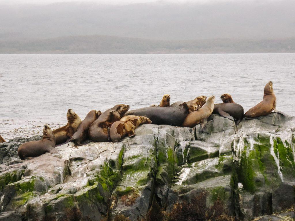 hoogtepunten Argentinië een tocht over het beagle kanaal