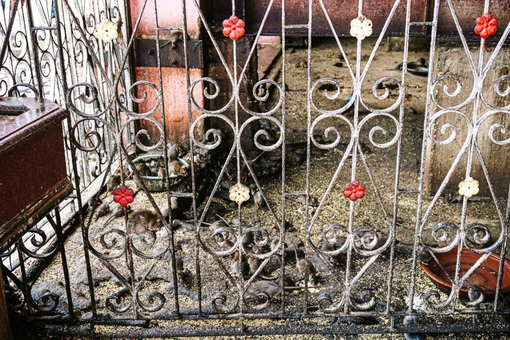 Rat in heilige tempel