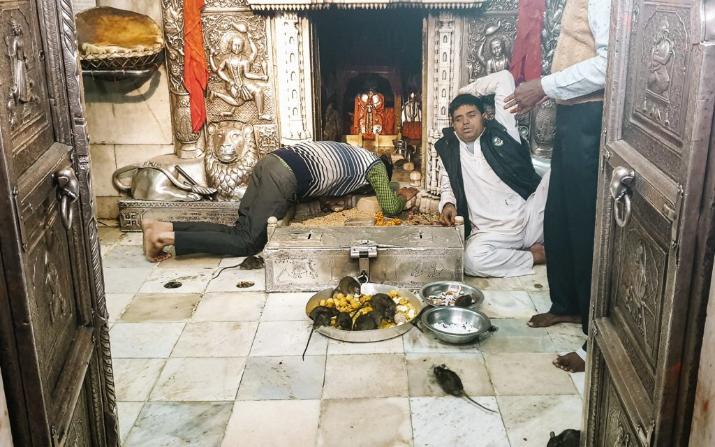priester Rattentempel India Karni Mata Deshnok