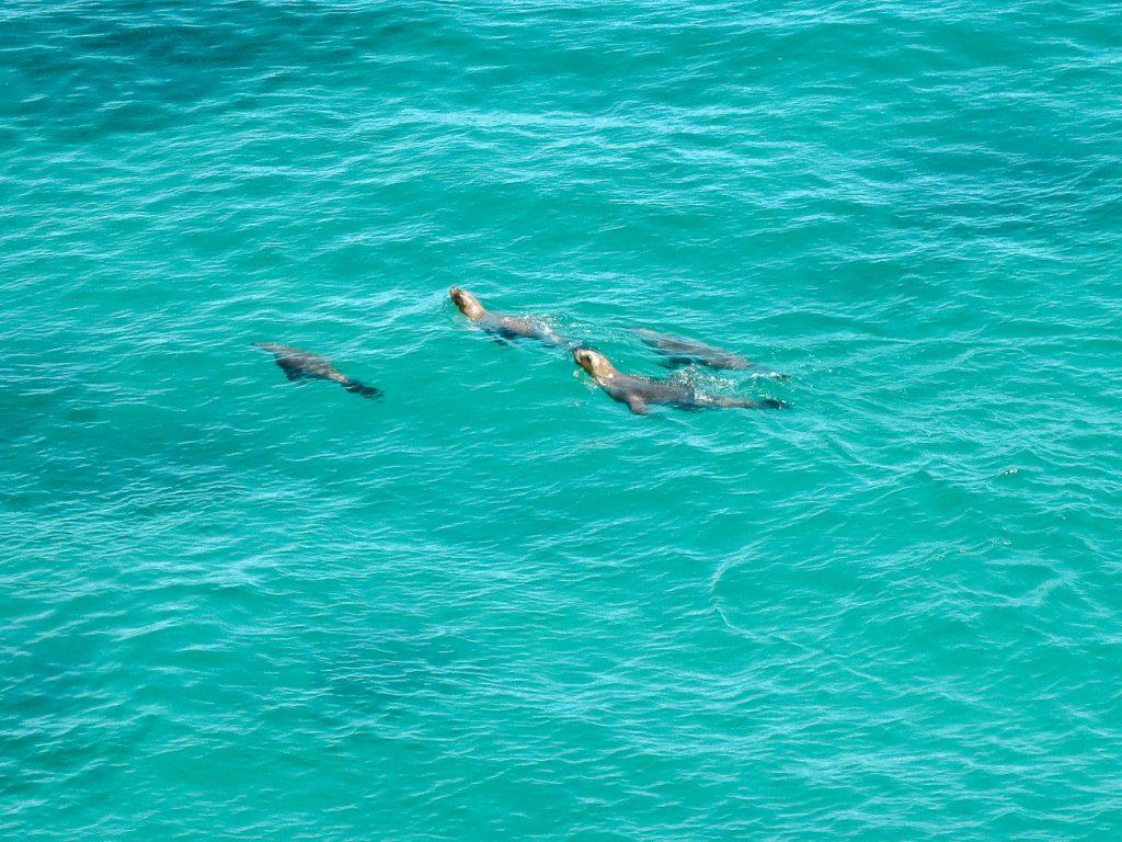 snorkelen met zeehonden Puerto Madryn argentinie