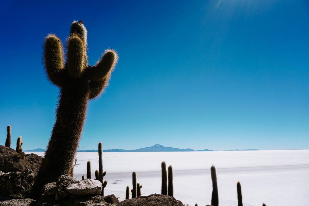 isla Incahuasi to visit during a Uyuni salt flats day tour