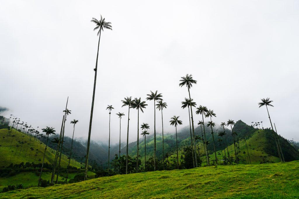 Valle de Cocora | een van de mooiste plekken in Colombia