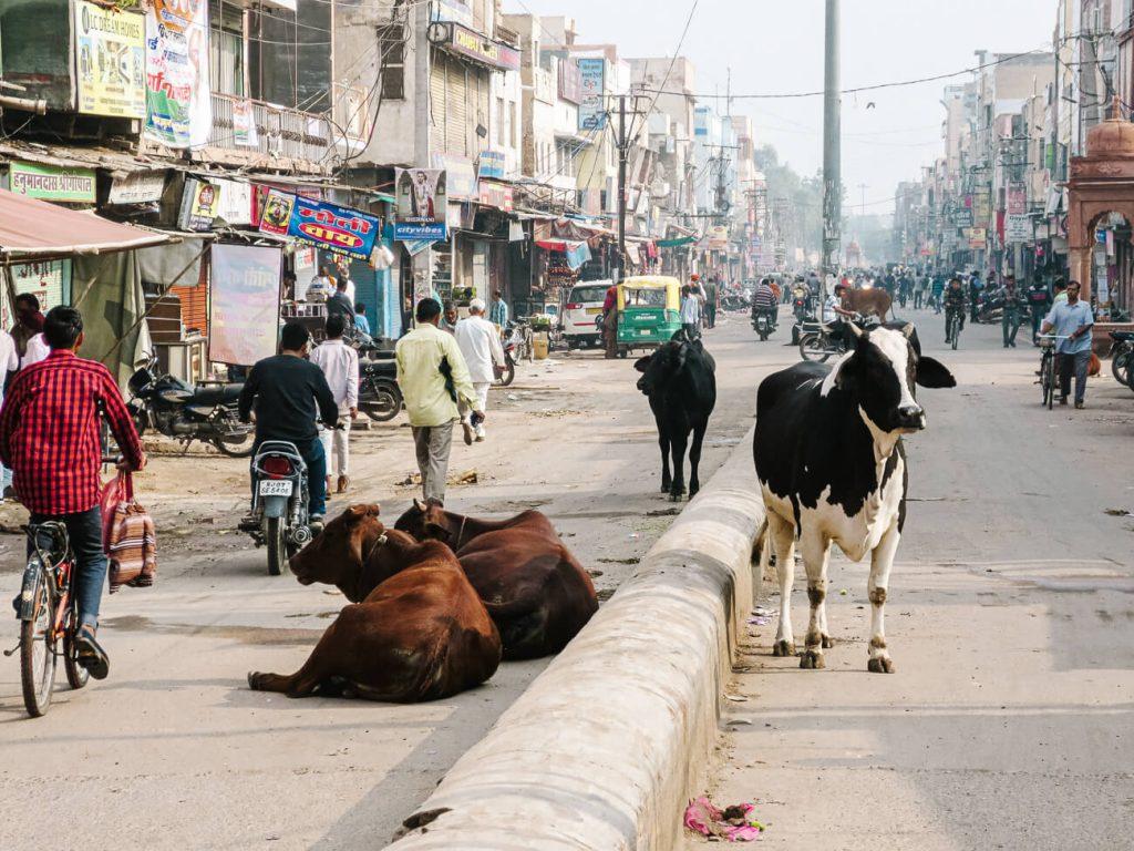 Things to do in Bikaner Bikaner centrum
