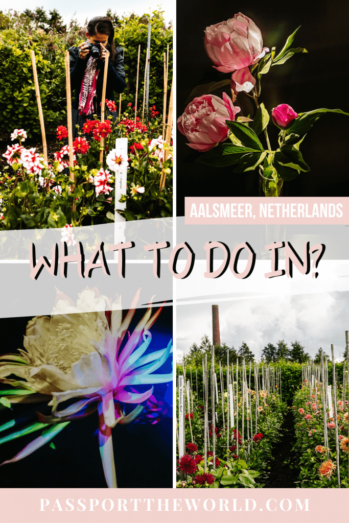 Discover the city of flowers in the Netherlands: Aalsmeeer - a full guide