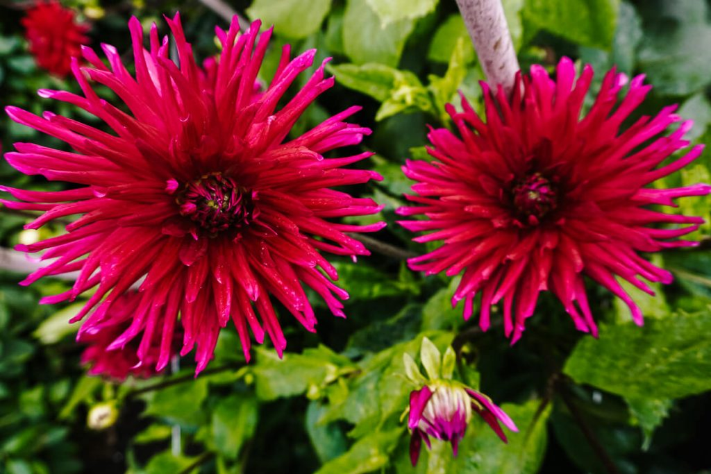 best things to do in Aalsmeer   visit the historical garden to see many flowers