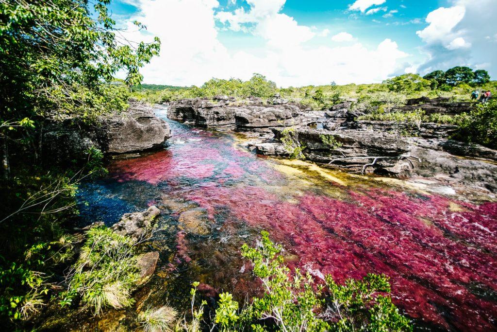 El Caño Cristales | een van de mooiste plekken in Colombia op het gebied van natuurr