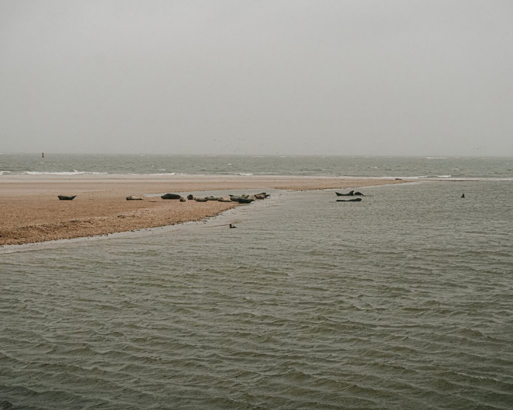 things to do on Texel   observe sea lions