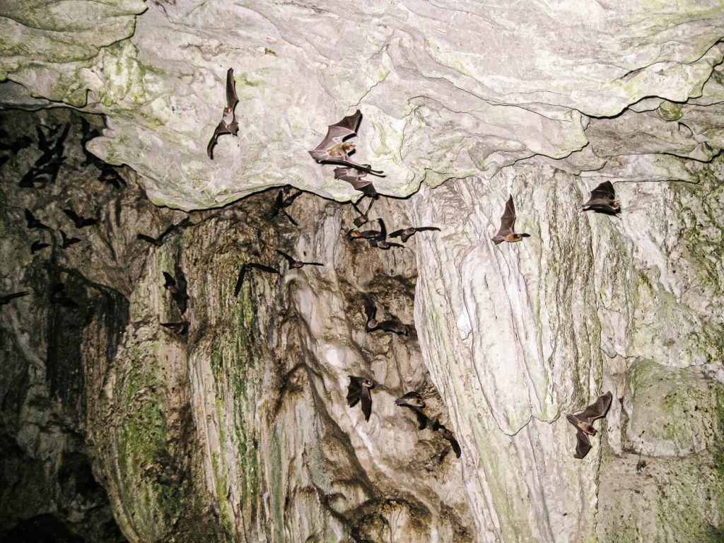 bats in Lanquin caves Guatemala