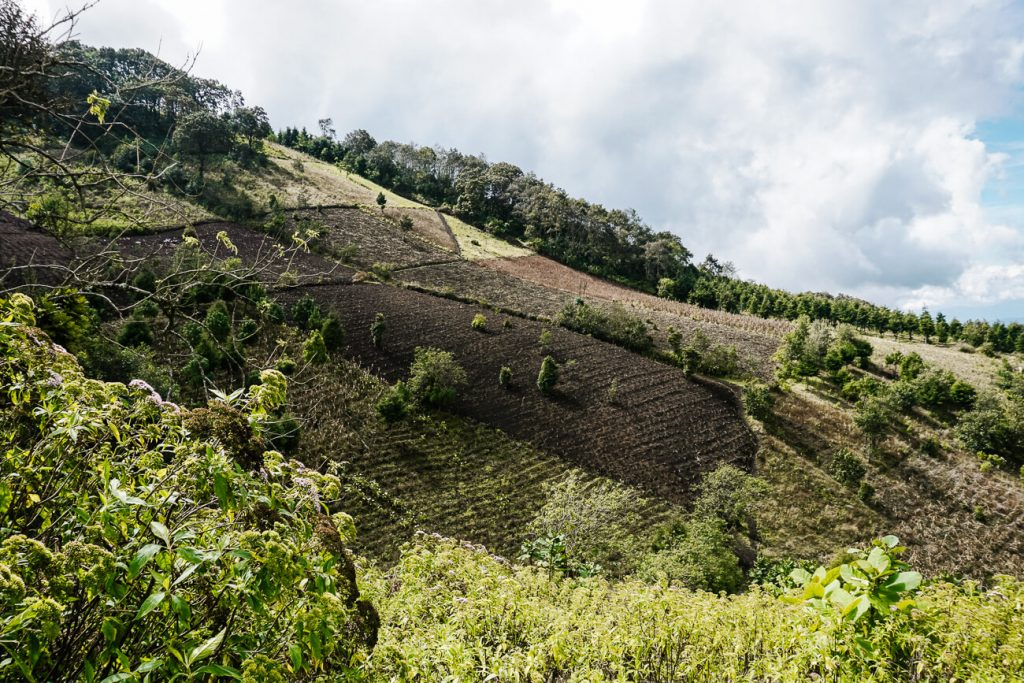 the first part when hiking the Acatenango is wide with many farmers at work
