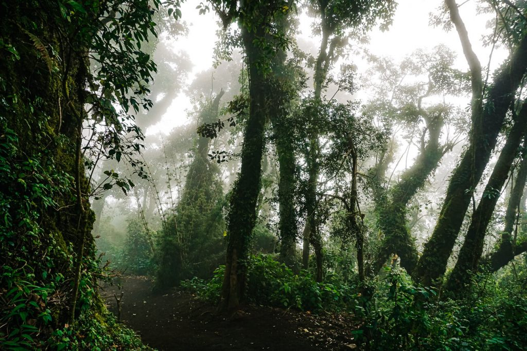cloud forest in Guatemala