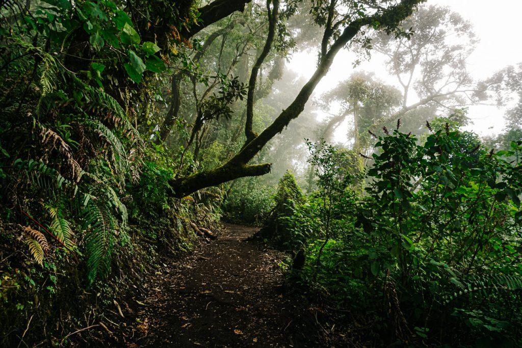 Acatenango hike, top things to do in Guatemala