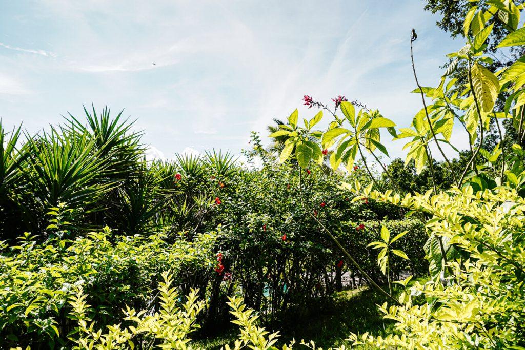 groene vegetatie in Peten
