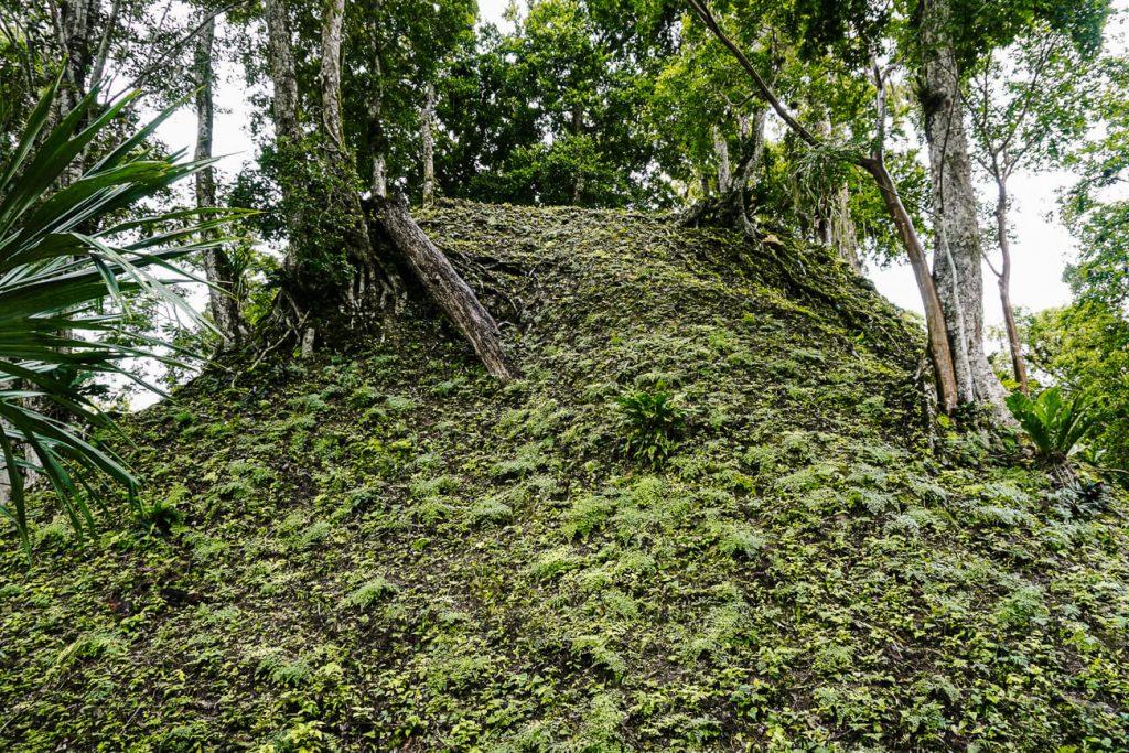 twin piramides in Tikal