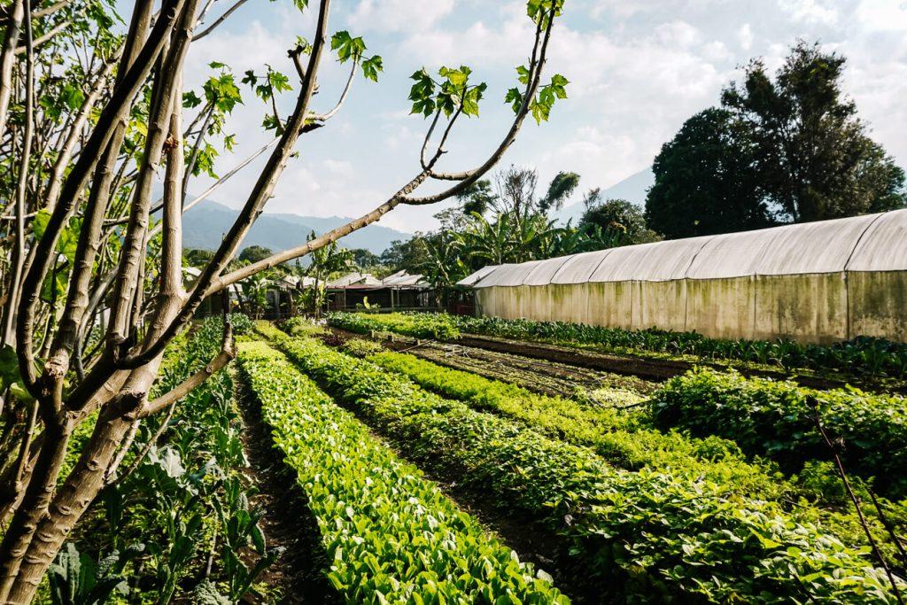 Caoba farms - een organische boerderij