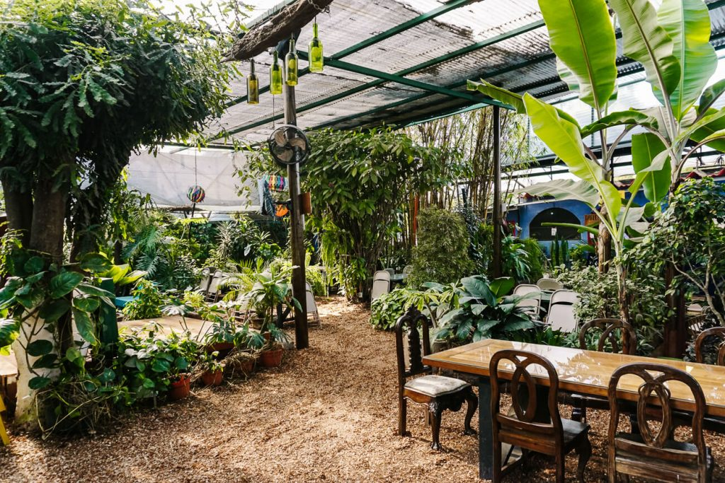 bloemen en planten bij Caoba farms - een organische boerderij