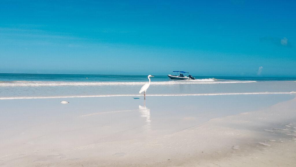 reigers op hagelwit strand van Isla Holbox