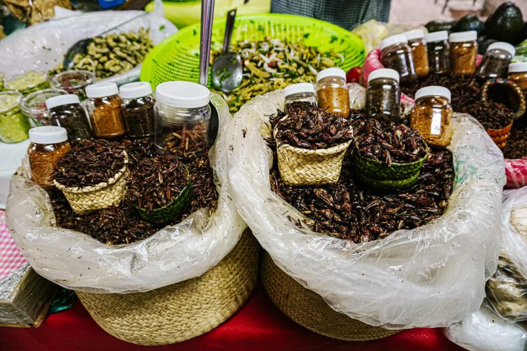 sprinkhanen in Oaxaca
