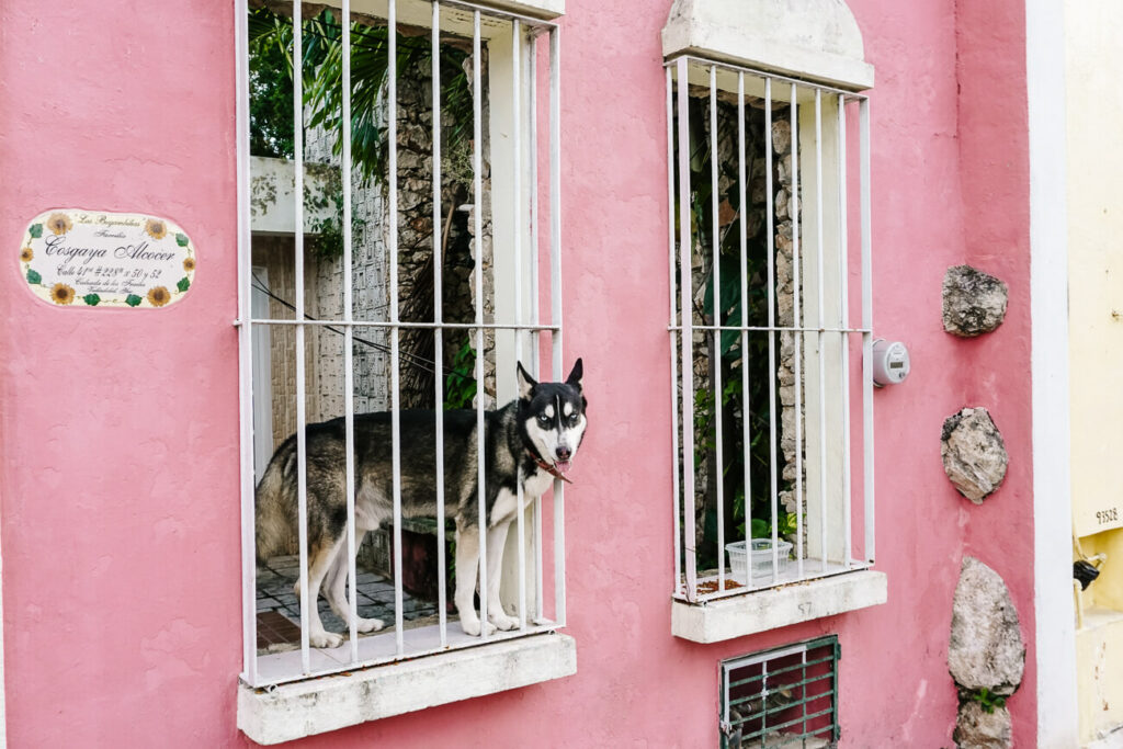 hond in roze huis Valladolid