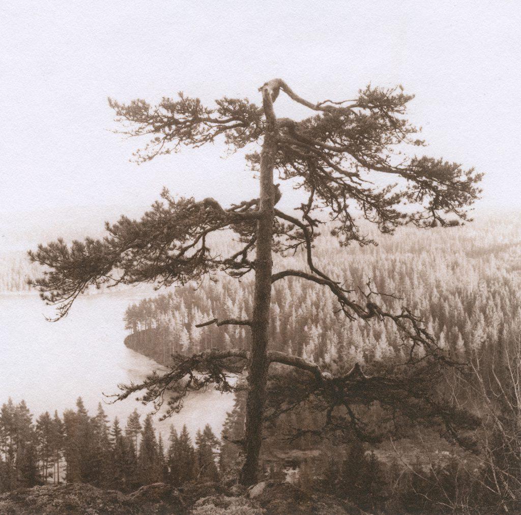 """ur """"Skomarka"""", 1991, selentonat saltpapper (klicka för större bild)"""