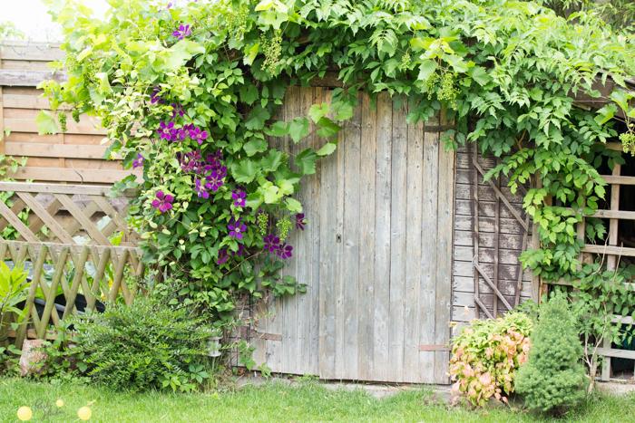 Viele Pflanzen können auch auf Dächern oder über Gartenhäuschen wachsen