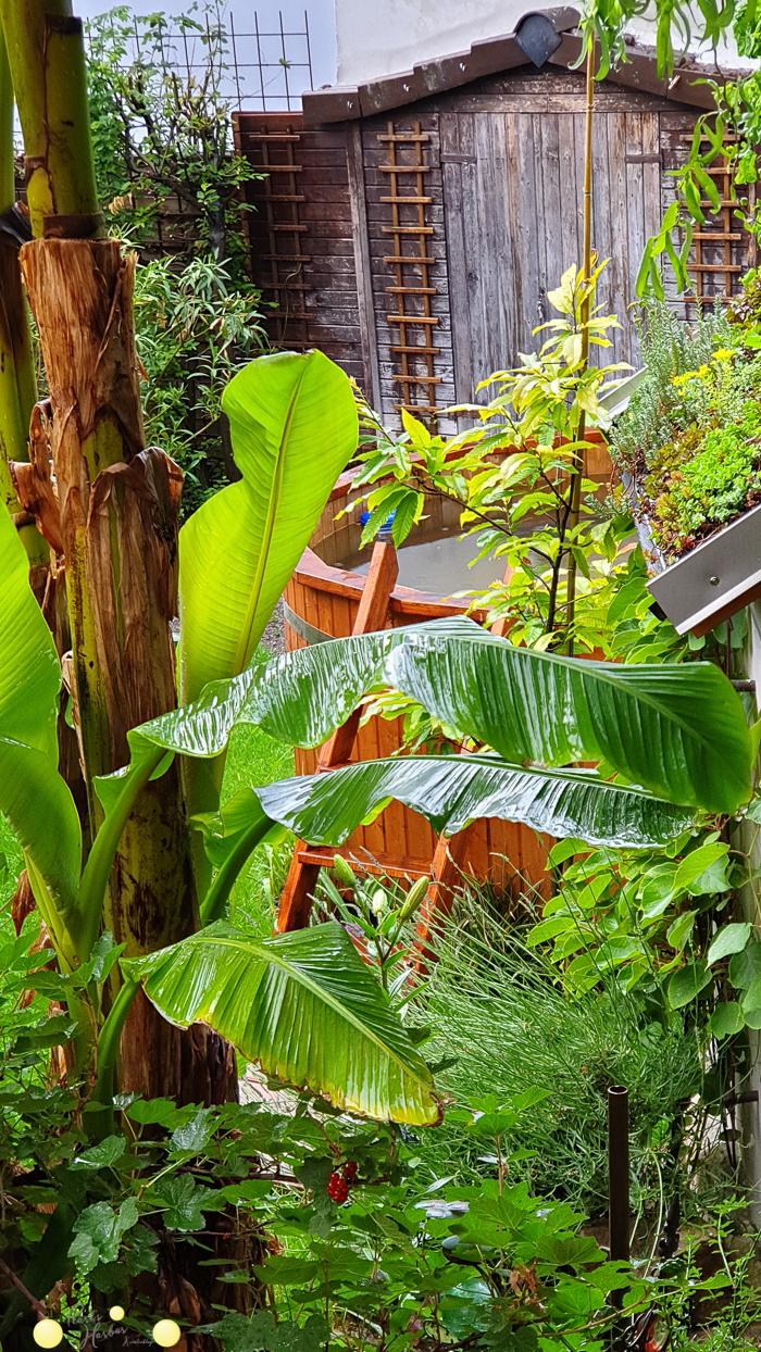 Bananenstaude und Holzpool im kleinen Garten