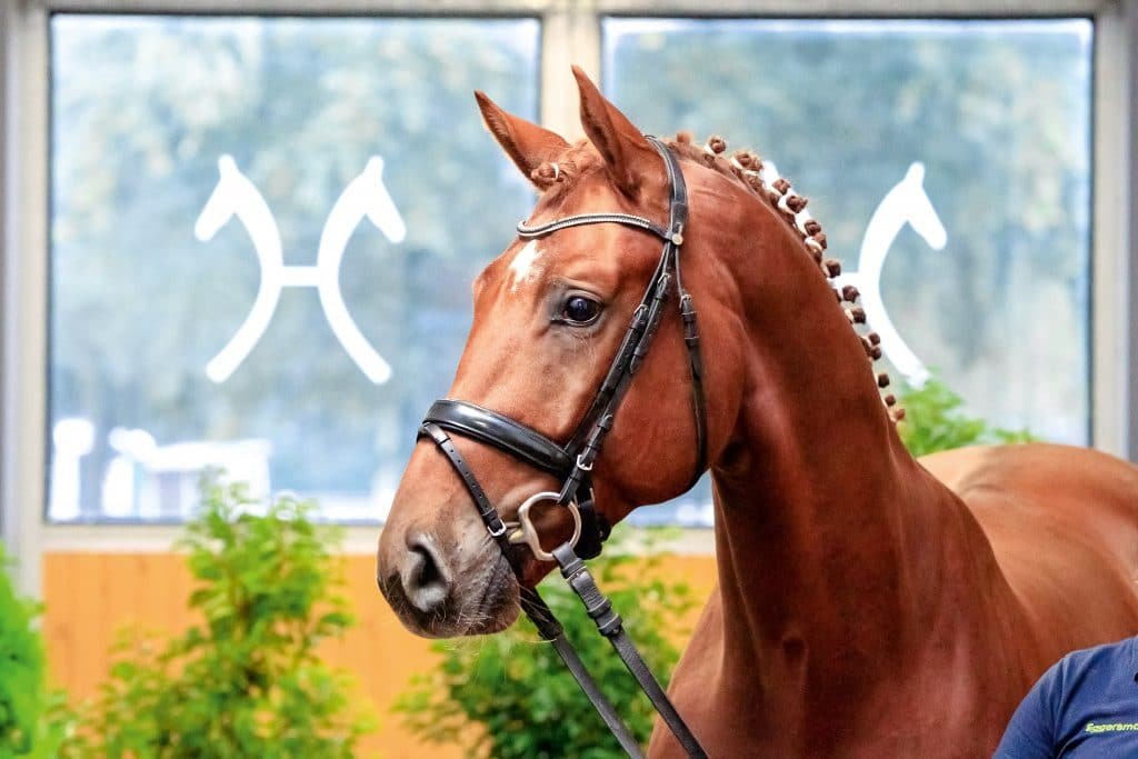 Favourite Boy v. Floriscount/Diamond Hit. Foto: Hannoveraner Verband