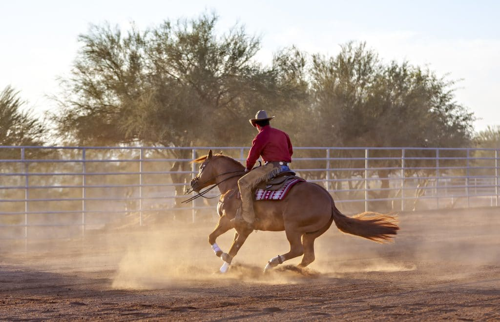 Reining Horse Spin