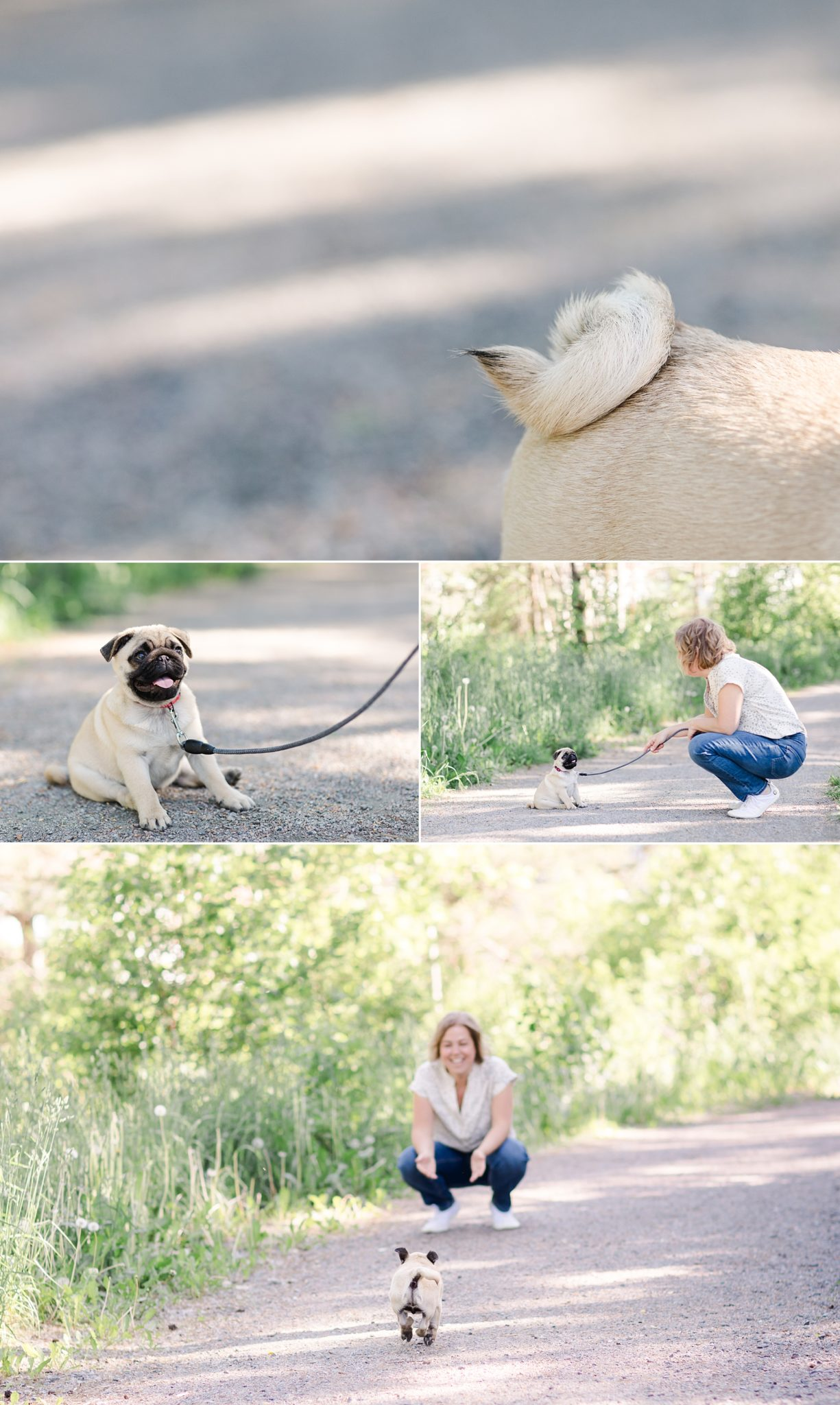 A collage of cute photos of a pug puppy