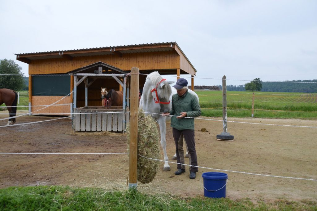 Erste Schritte mit dem eigenen Pferd