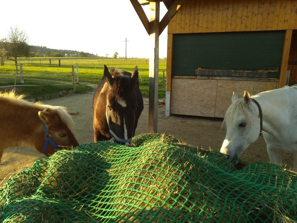 Grundbedürfnisse unserer Pferde